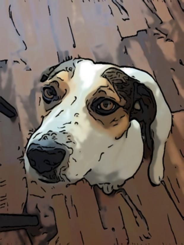 Honden met colitis diarree en PEA
