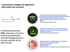 Microglia en mastocita: nuovi target terapeutici e una sostanza di natura lipidica: la palmitoiletanolamide.
