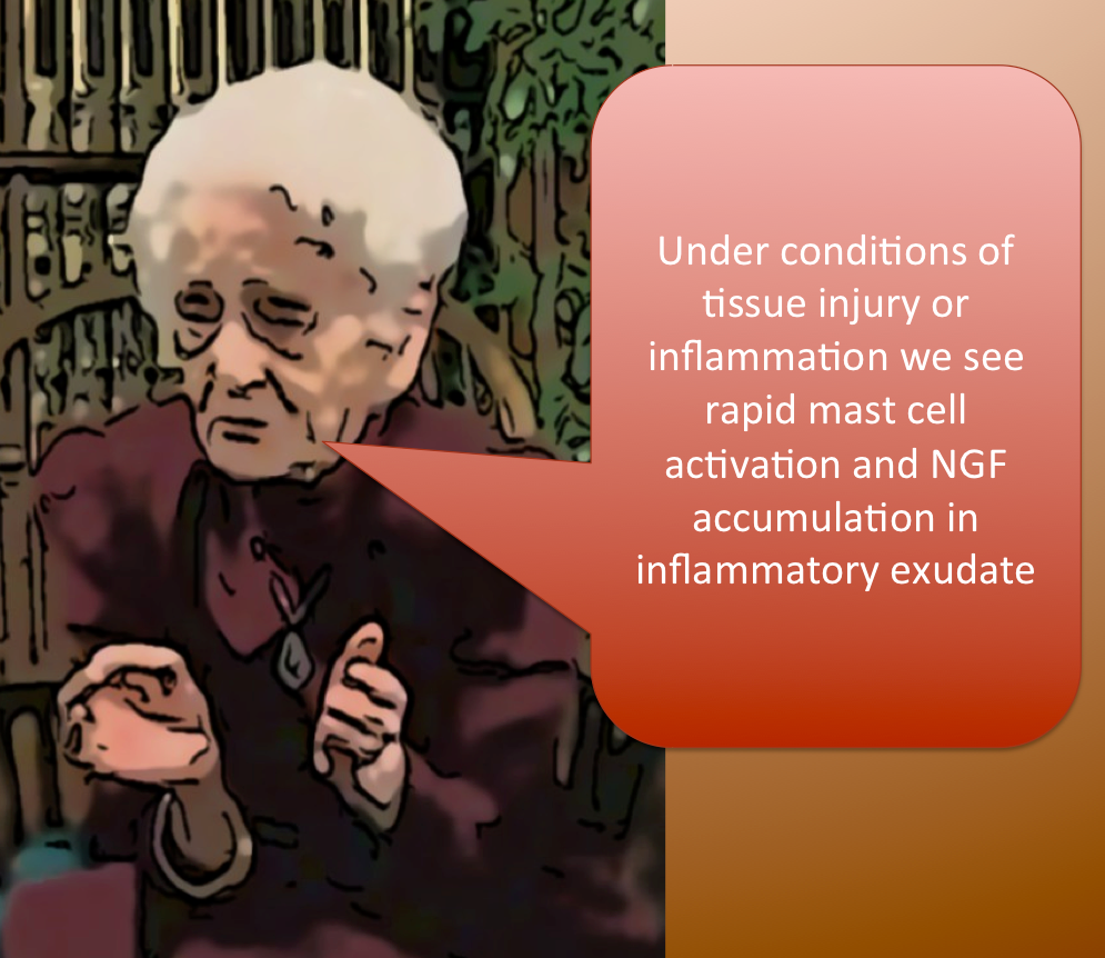 Mast cell, NGF and Montalcini