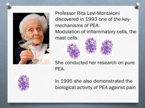 Montalcini-mast cell