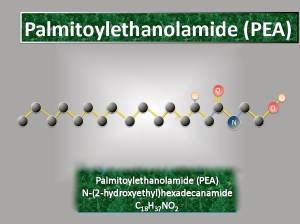 structure of palmitoylethanolamide