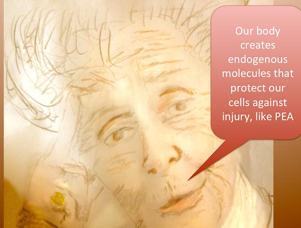 Rita Levi-Montalcini on endogenous protector molecules