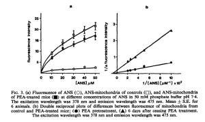 PEA protects membrane of mitochondria