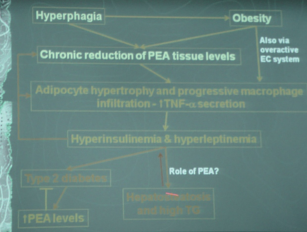 Obesity, chronic inflammation, PEA shortage and the role of PEA