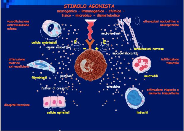 STIMOLO AGONISTA