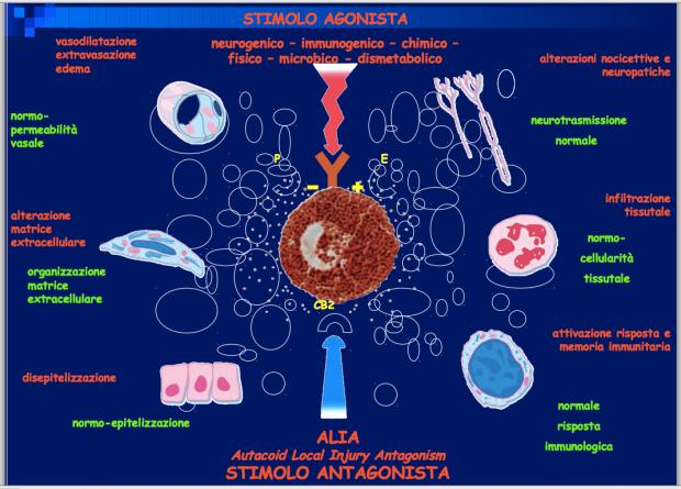 STIMOLO ANTAGONISTA: Palmitoylethanolamide