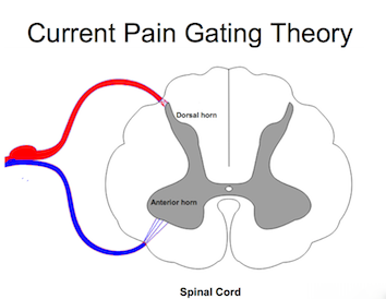 Pain Gating is not only related to nerves, non-neuronal cells play an important role!