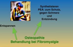 Osteopathie: Fibromyalgie Behandeln