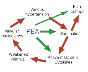 PEA inhibits inflammation and pain in CVI