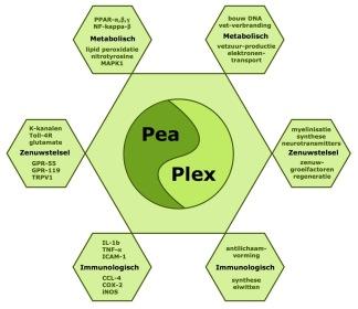 PeaPlex combineert de werkingsmechanismen van PEA met die van een serie vitamines uit de B groep